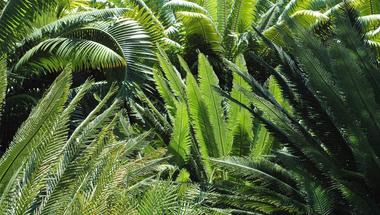 A növényvilág dinoszauruszai