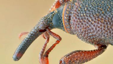 A bogarak már a spájzban vannak