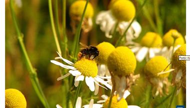 A méhek titka (Világjáró)