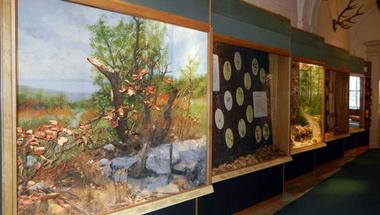 A Magyar Természettudományi Múzeum (MTM) Bakonyi Természettudományi Múzeuma