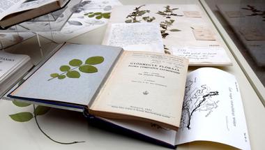 Hogyan határoztak botanikust a századelőn?