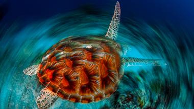 Az Év Természetfotói 2014