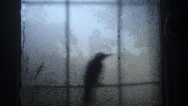 Canon – Az Év Természetfotósa 2015 a Magyar Természettudományi Múzeumban