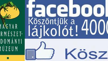 Köszöntjük a 4000. lájkolót a múzeumi  facebook oldalunkon.