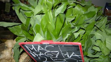 A medvehagyma (Allium ursinum)
