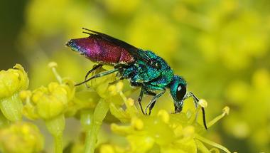 ROVARLESEN - rovarászat a Pöttöm Óvodában
