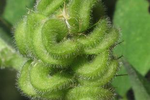 Az élőhely megsemmisült, a növény életre kelt