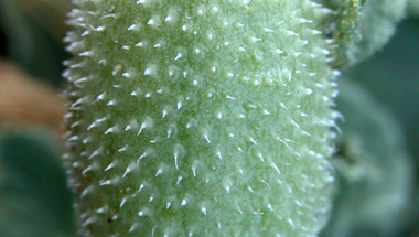 A fondorlatos pisilős uborka