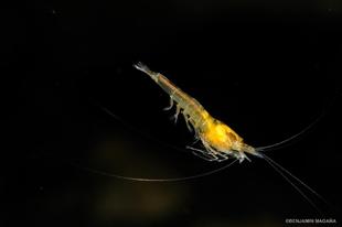 Új zoológiai felfedezések Yucatán állam víz alatti barlangjaiban