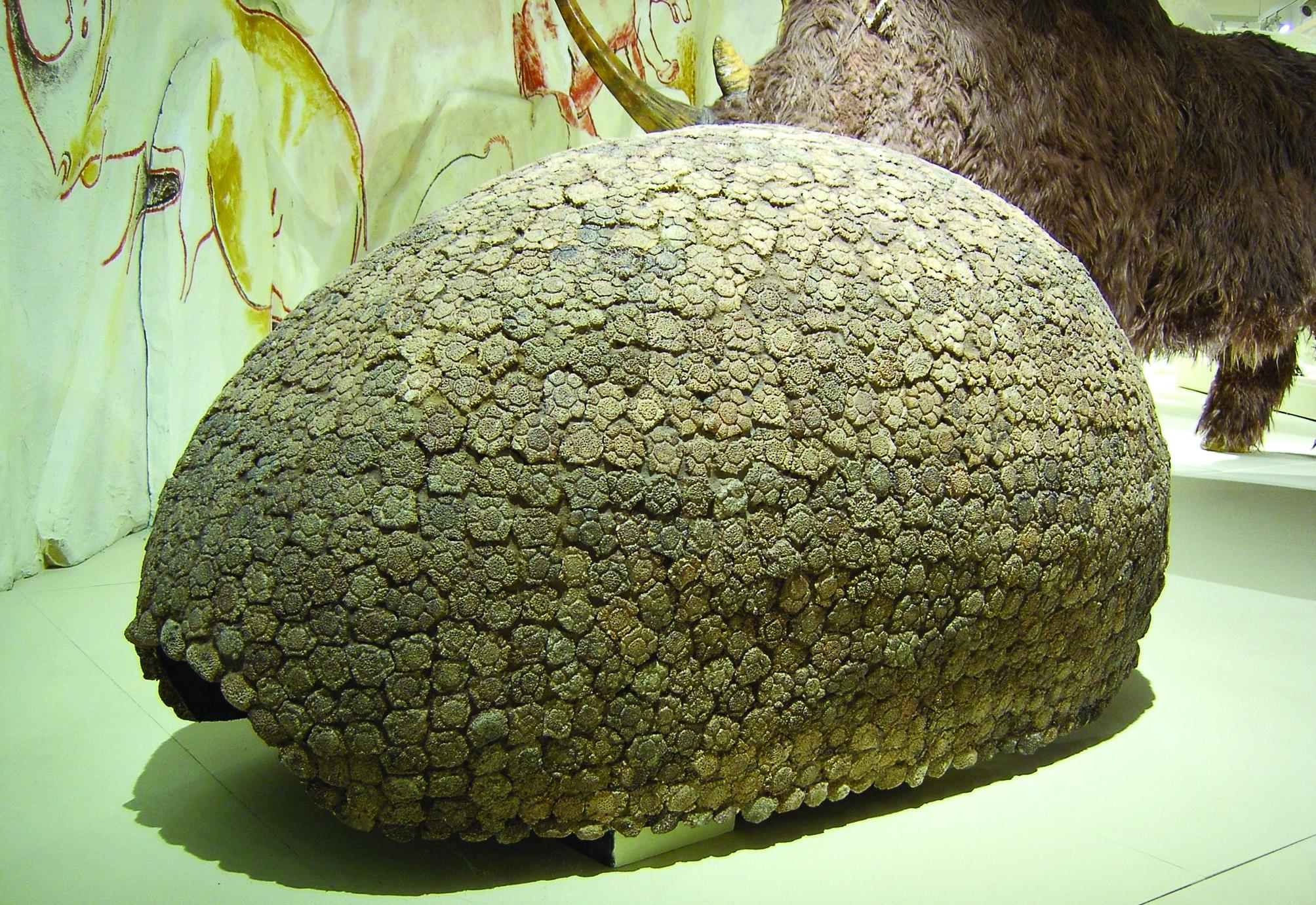 glyptodonpancel_jegkorszak_kiallitas2008.jpg