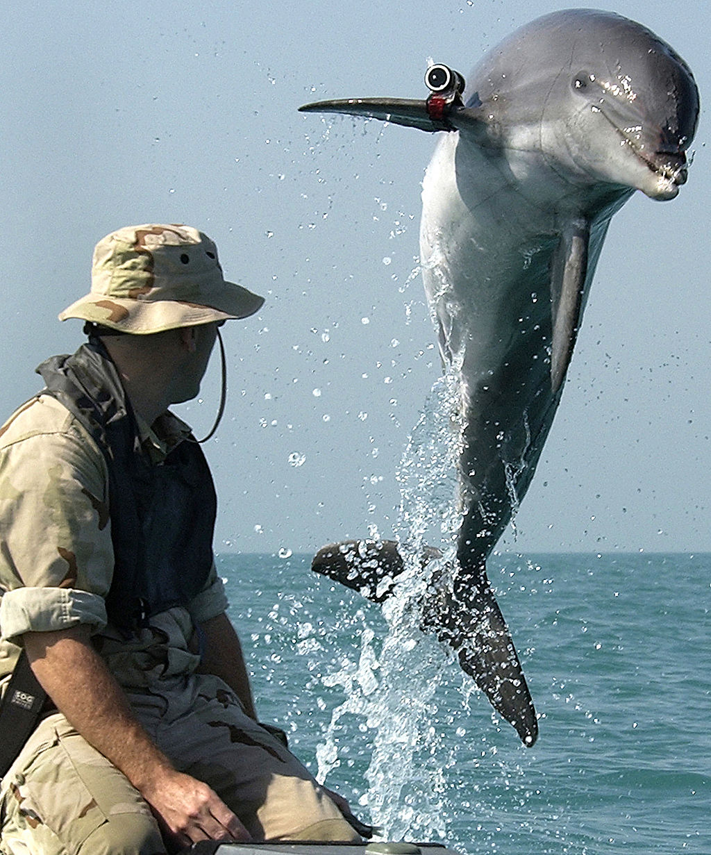 1024px-nmmp_dolphin_with_locator_wiki.jpeg