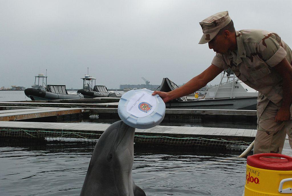 1024px-us_navy_101013-n-0363b-063_marine_mammal_handler_gunner_s_mate_3rd_class_manuel_gonzalez_and_a_bottlenose_dolphin_both_assigned_to_explosive_ordna.jpg