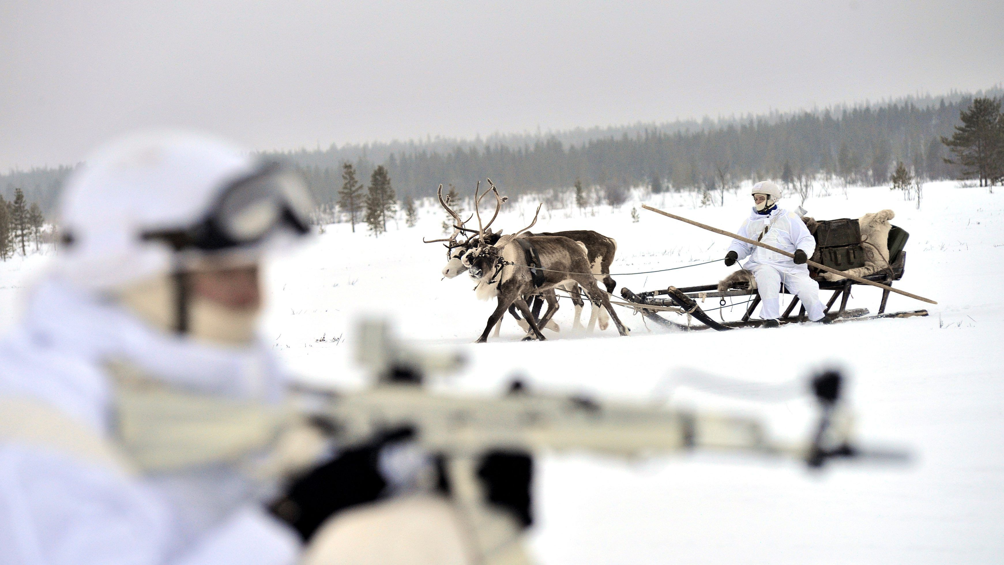 4_kep_orosz_renszarvas_russia_army_reindeer-e1485799877369.jpg
