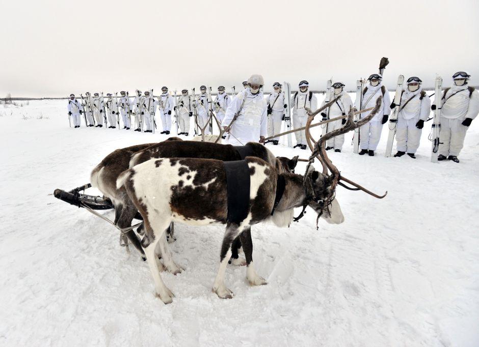 4_kep_orosz_renszarvas_russia_army_reindeer_03.jpg