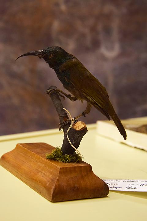 ornitologus_lexikon_konyvbemutato_2018_07_12_15_web.jpg