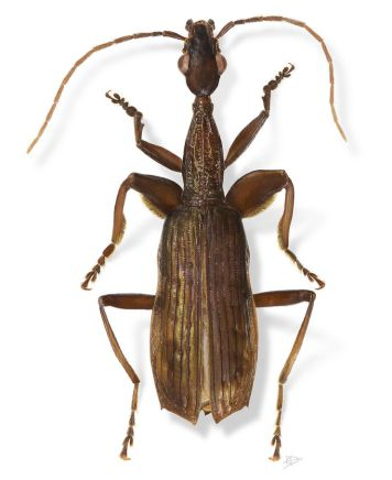 weird-new-species-names-agra-schwartzeneggeri-portrait_70273_990x742.jpg