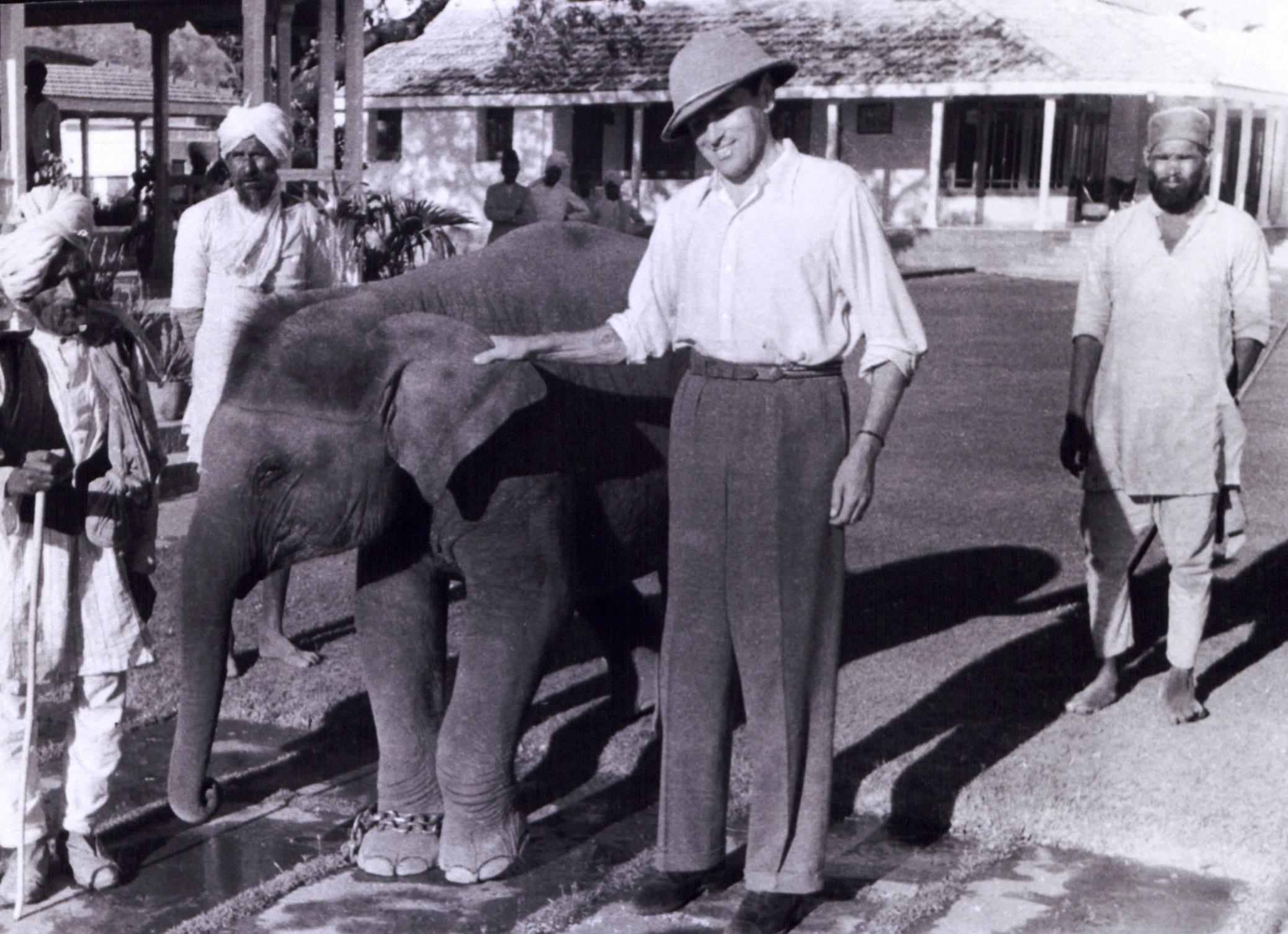 indiai_elefant.jpg