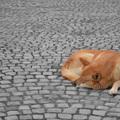 Samanta Schweblin: Megölni egy kutyát (2002)