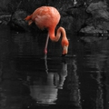 Horacio Quiroga: A flamingók harisnyája (1916)