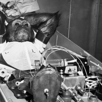 Csimpánz Föld körüli pályán