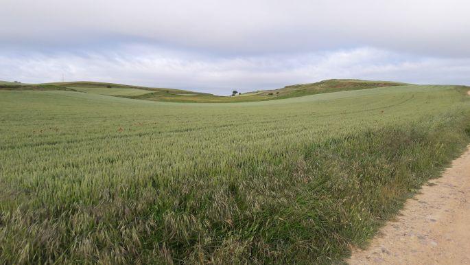 El camino búzamező