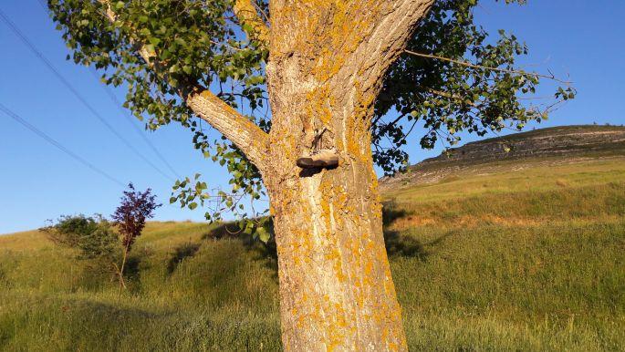 El camino elhagyott bakancs a fán