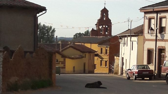 El camino, kutya az úton