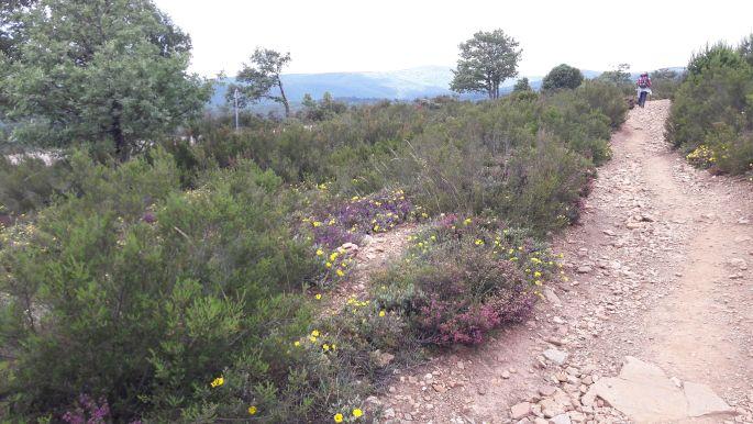 El camino, virágokkal szegélyezett út