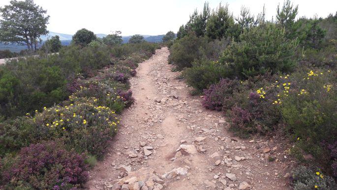 El camino, virágokkal szegélyezett út felfelé