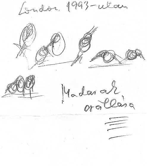 Tandori Dezső rajza
