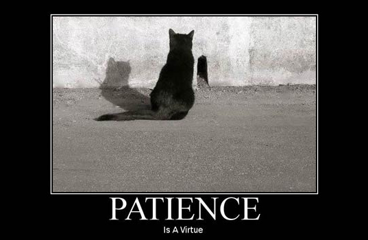 patience-cat-waiting.jpg