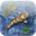 Koi Pond: akvárium szimulátor