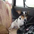 VI. Russell/Beagle túra - Királyrét