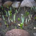 Közeledik a tavasz