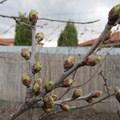 Tavaszias