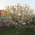 Újabb tavaszi hét