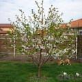 Tavasz és Szülinap