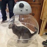 Olcsó BB-8 otthonra!
