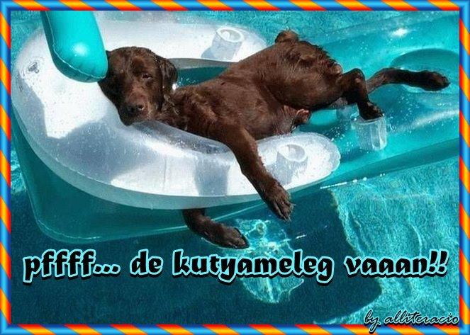 kánikula-kutyameleg.jpg