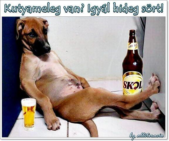 kutyameleg-igyál-sört.jpg