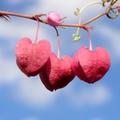 A Biblia szerint a szeretet választás kérdése