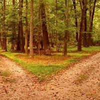 Négy döntés, amely meghatározza a sorsod