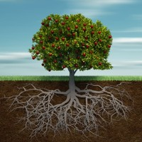 A gyümölcs a mély gyökerekből jön
