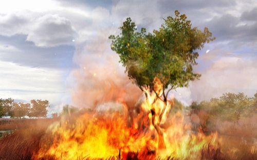 far-cry-2-grass-on-fire-screen-shot.jpg