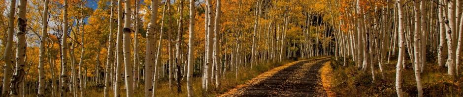 park-autumn-trees-940x198.jpg