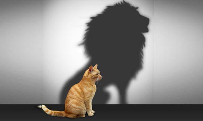 self_esteem_lion.jpg