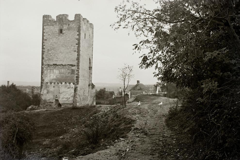 schermannakos1932.jpg