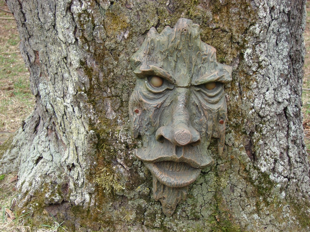 old-man-tree-1024x768.jpg