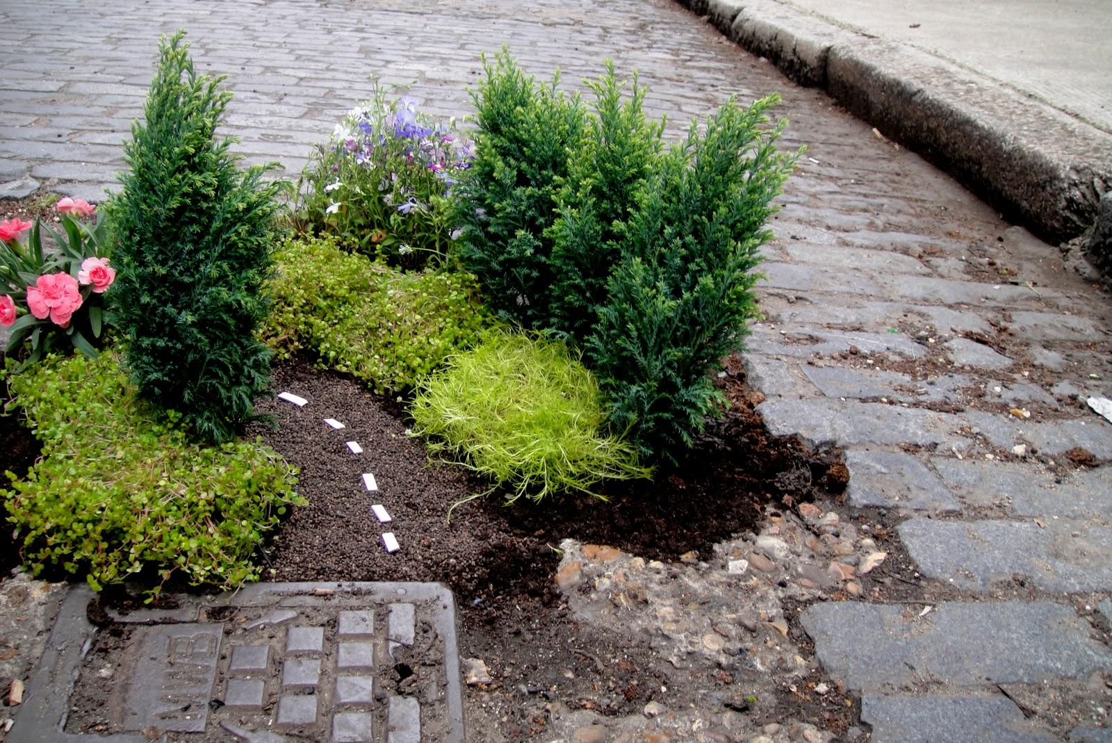 the-pothole-gardener.jpg