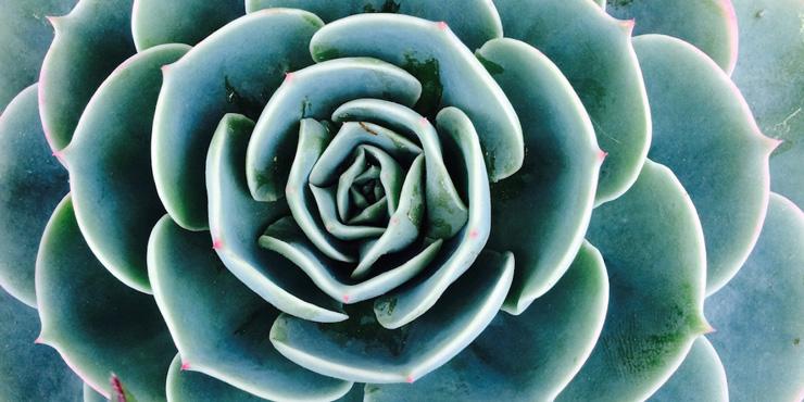 somatic-fractal-succulent-organic-intelligence-blog.jpg